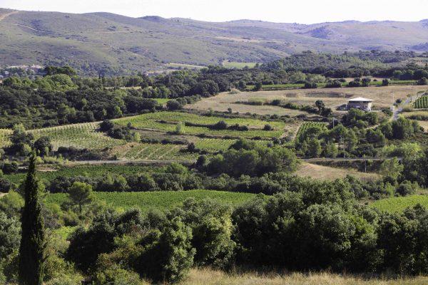 Vignobles des Charmes de Château Haut-Blanville