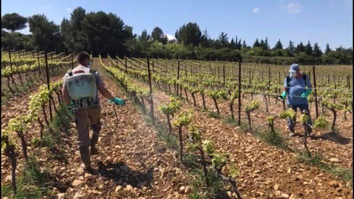 Traitement bio sur nos vignobles